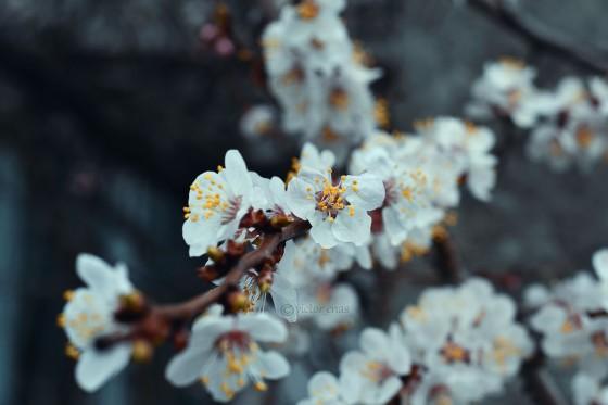 Horror blossoms