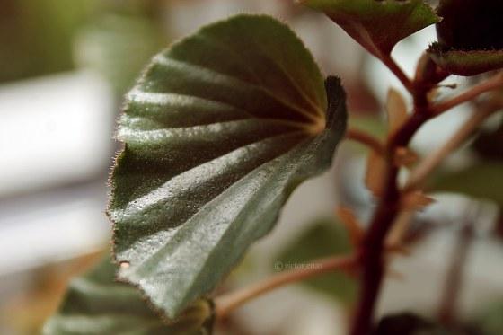 Leaf sharp