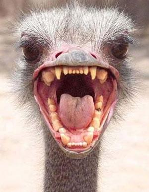 ostrich_headjpg